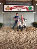 District Champion and Reserve Market Lambs